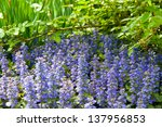 Spring garden with blue flowers. selective focus - stock photo