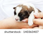 Small puppy dog resting in woman hand - closeup - stock photo