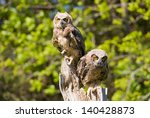 Great Horned Owlets - stock photo
