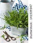 Fresh kitchen garden arugula and scissors. - stock photo