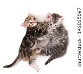 Kitten sisters on white background - stock photo