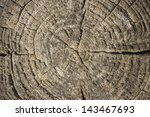 Texture of cut tree trunk - stock photo