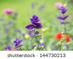 field with colorful wild flowers  - stock photo