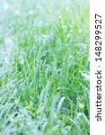 Juicy fresh grass in the morning dew - stock photo