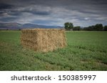 Hay Bale in Field of Green - stock photo