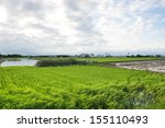 Rice field with blue sky, near sunset, YiLan, Taiwan. - stock photo