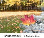 Autumn leaf on a branch of spruce - stock photo