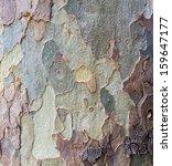 Bark texture tree trunk - stock photo
