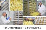 Chicken Farm - Incubator, Eggs and Baby Chicken - stock photo