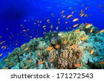 Colorful fish in the tropical reef of the red sea  - stock photo