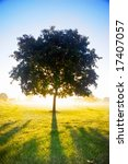 Loneley tree in bright sunshine - stock photo