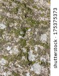 Stone texture with moss - stock photo