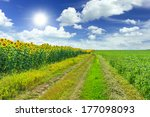 Agriculture fields - stock photo
