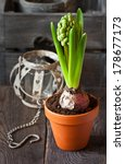 Spring hyacinth flower in pot on a wooden garden board. - stock photo