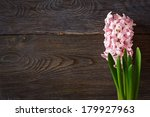 Beautiful spring hyacinth on a wooden background with copy space for text. - stock photo