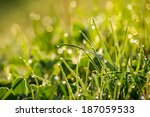 forest glade  close up with shiny blur of wet grass in the warm sun light - stock photo