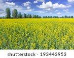 Rapeseed field - stock photo
