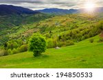 summer landscape. village on the hillside near forest on the mountain at sunset - stock photo