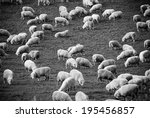 Lush green rolling hills populated with the ubiquitous New Zealand sheep.  - stock photo