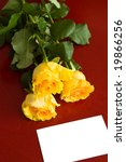 three yellow roses and white card - stock photo