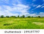 Meadow - stock photo
