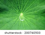 drop on lotus leaf - stock photo