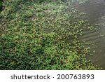 Lotus pond with repeated lotus leaf - stock photo