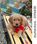 adorable golden retriever puppy laying on sleigh - stock photo