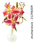 lily bouquet in vase isolated on white - stock photo