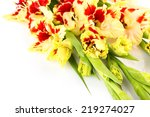 Red and yellow bright gladiolus \ horizontal \ close up \ isolated - stock photo