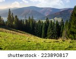 hillside of mountain range with coniferous forest and meadow - stock photo