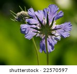 purple beauty - stock photo