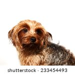 Cute wet dog portrait - stock photo