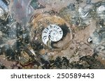 Stone with fossil background - stock photo