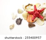 Heap of Sea Shells isolated on white background with place for Your text - stock photo