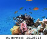 a big lionfish sleeping on coral reef - stock photo