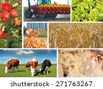 Agriculture - collage, food production - corn, wheat, tractor sowing, apple, cows on pasture, chicken farm, lettuce - stock photo