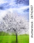 beautiful spring apple tree in blossom with mystical rays of light and sky - stock photo