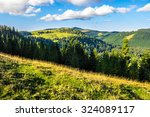 early autumn landscape. field in front of coniferous forest on a steep hillside in romanian mountains in morning light - stock photo