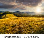 meadow with tall grass on a mountain top near coniferous forest in evening light - stock photo