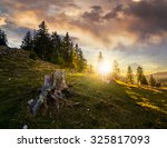 old stump among green grass and stones in front of fir forest on hillside in evening light - stock photo