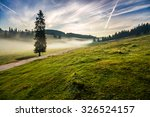 fir tree in fog by the road through  hillside meadow in high mountains in morning light - stock photo