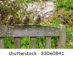 4 sparrows on a park seat looking for food. - stock photo