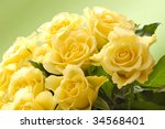 yellow roses on green background - stock photo