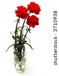 three red carnations in a vase on white background - stock photo