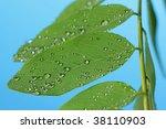 raindrops on green leaves - stock photo