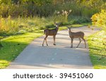 Two deer on a city park bike path in early morning light - stock photo