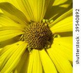Yellow macro flower - stock photo