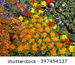Bright flower beds, landscaping  - stock photo
