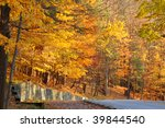 Brilliantly colored autumn foliage in a forested park - stock photo